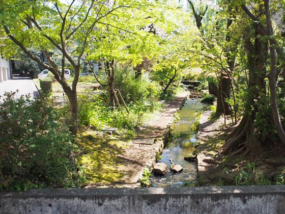 武蔵中学校 濯川